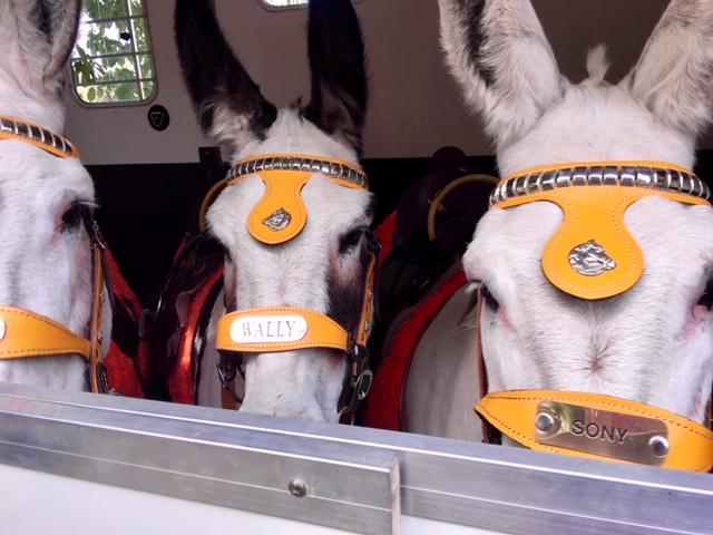 thurnscoe beach party donkeys